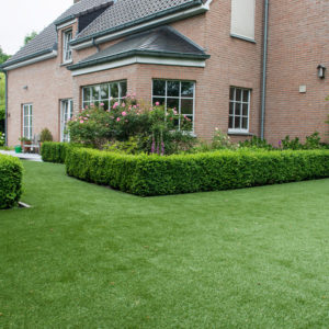 Downton artificial grass looks at home with mature hedge borders and attractive rose garden